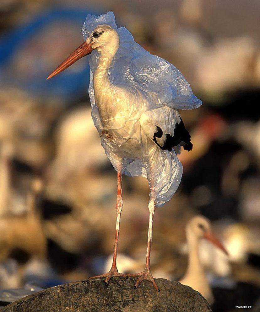 Pollution : un oiseau pris dans un sac plastique