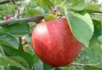 pommes empoisonées aux pesticides